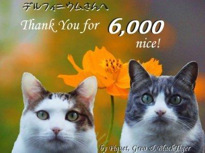 m_6000nice-400.jpg